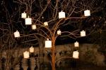 albero-notte_architettura-milano